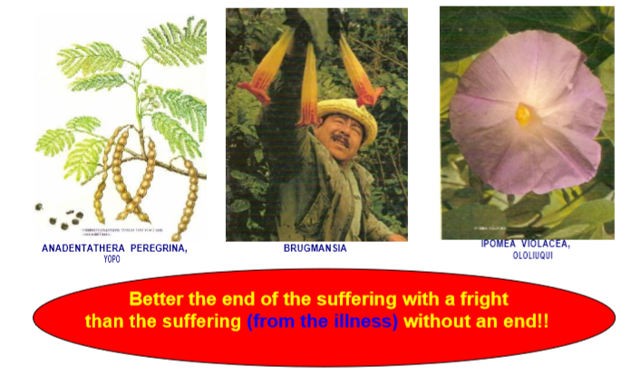 Brugmansia and other sacred power plants from the Andes