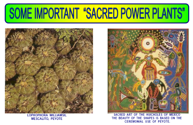 sacred power plants